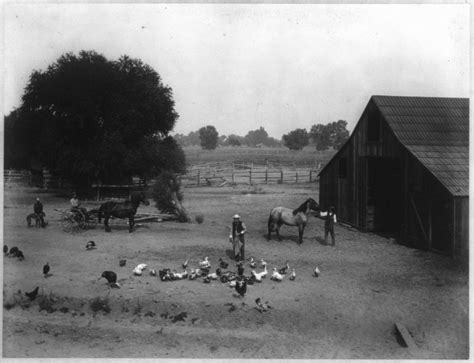 watkins collection ohare ranch