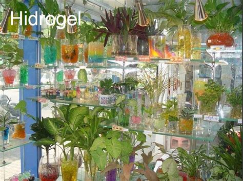 pengertian  fungsi hidrogel  tanaman hias indoor