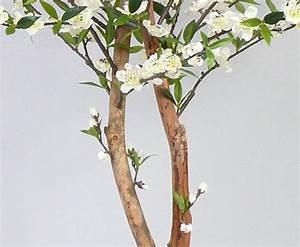 Getrocknete Blüten Kaufen : kirschbl tenbaum mit wei en bl ten online kaufen ~ Orissabook.com Haus und Dekorationen