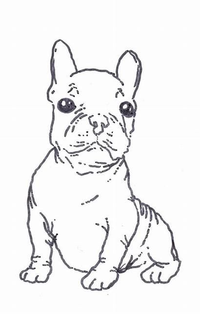 Bulldog Coloring French Terrier Boston Printable Dog