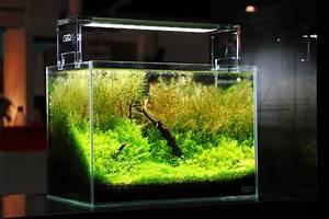 Aquarium Einrichten 60l : co2 anlage im aquarium alles wissenswerte zum thema co2 ~ Michelbontemps.com Haus und Dekorationen