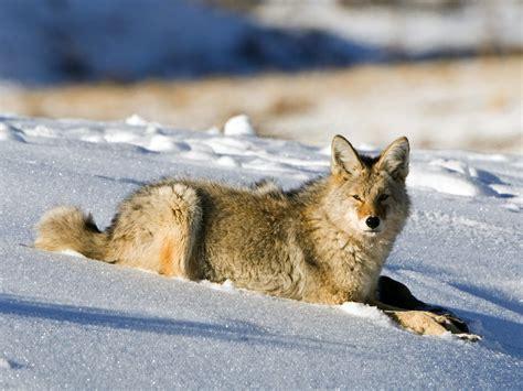 photography nature world people beauty beautiful wolf