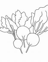 Beets Coloring Learn sketch template
