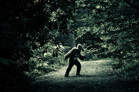 bigfoot sightings pennsylvania washington sasquatch sighting state famous become istock woods hotbed years story then week seattle magazine