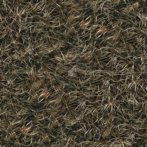 Dry grass texture seamless 12931