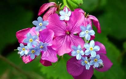 Spring Flowers Wallpapers Desktop Backgrounds 3d Flower
