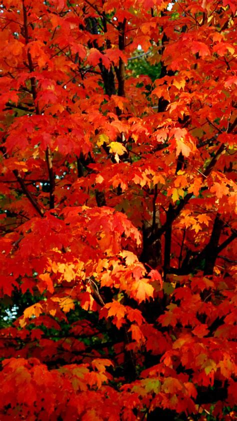 Autumn phone wallpaper categories : Aesthetic Fall Wallpaper Home Screen ~ Kecbio