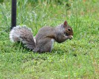 faq how to keep squirrels from eating suet the zen