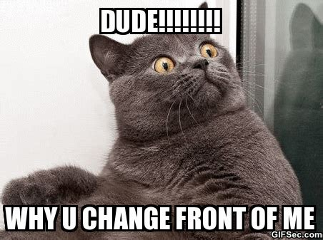 Awkward Cat Meme - awkward