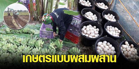วิถีพอเพียงแบ่งพื้นที่นาทำสวนผสม ขุดคลองปลูกกล้วยเลี้ยงเป็ด