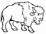 Bison Coloring Buffalo Drawing American Clipart Clip Water Cartoon Pages Awesome Nice Cliparts Printable Drawings Getcolorings Getdrawings America Favorites Point sketch template