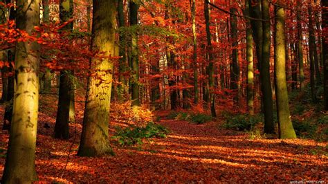 Wallpaper High Resolution Fall Backgrounds by Fall Desktop Wallpaper 183 Free Awesome High