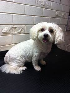 Michelle39s 39clip n snip39 dog grooming in greenwood perth for Snippets dog grooming