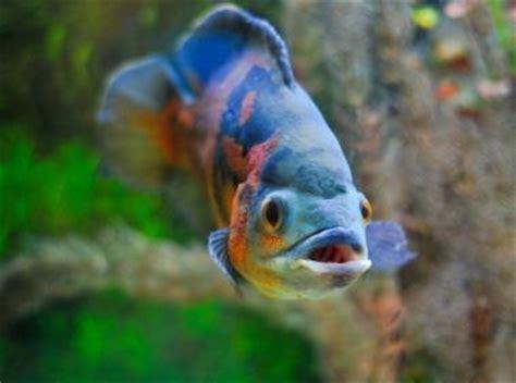 care  oscar fish lovetoknow