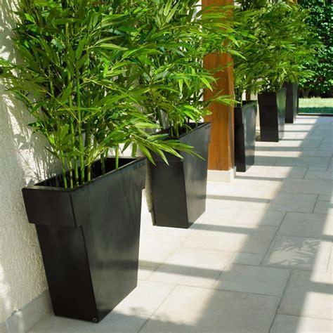 mur de bambou exterieur pot ext 233 rieur vaso black 75 cm la boutique desjoyaux