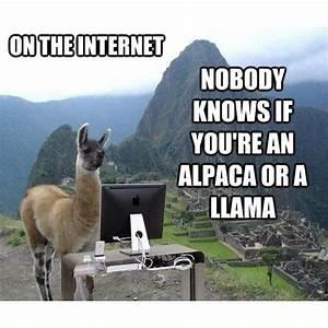 The 9 Funniest Llama Memes: Kendrick Llama, Llama Del Rey ...