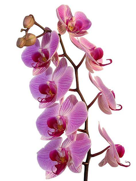 livraison de fleurs au bureau livraison de fleurs au bureau 28 images chrystelle gu