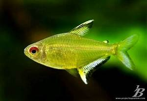 1000 images about Fish freshwater and aquarium on