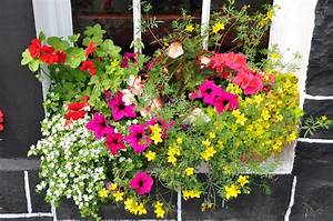 Blumen Für Sonnigen Standort : balkonkasten mit blumen bepflanzen eine sch ne ~ Michelbontemps.com Haus und Dekorationen