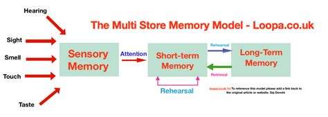 Multi Store Memory Model As A Level Psychology Aqa