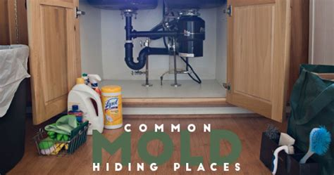 find mold   home codys appliance repair