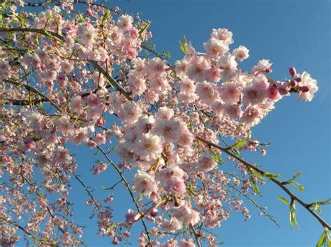 Svaiginantis pavasaris - lyg iš atviruko - DELFI Pilietis