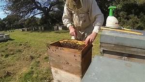 Comment Faire Une Ruche : tuto apiculture comment monter une ruche leveuse en vu de faire de l 39 levage de reines youtube ~ Melissatoandfro.com Idées de Décoration