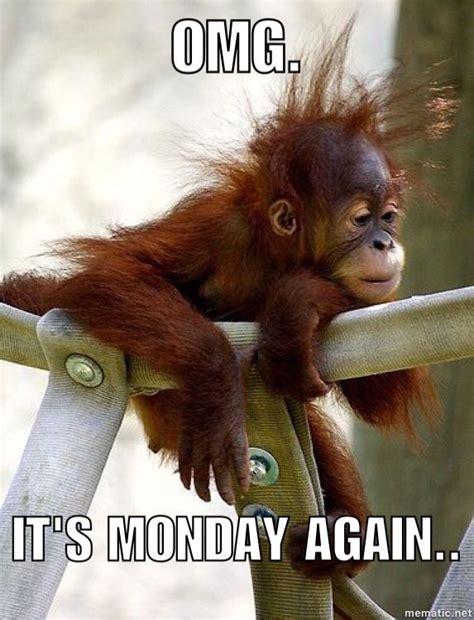 monday monkey mondays pinterest animals  pets