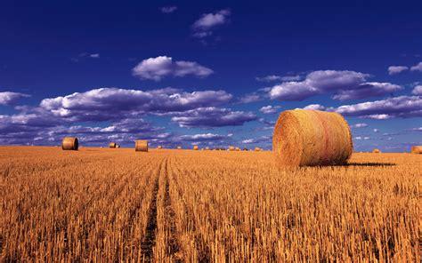 straw balls wheat field sky  clouds montana photo landscape desktop wallpaper hd  laptop mobile phones  tv  wallpaperscom