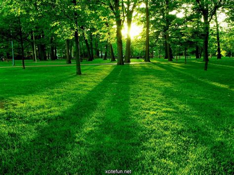 lush green nature photographic  lcd desktop