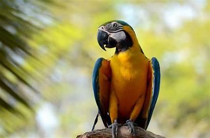 Exotic Birds Bird Rescue Shelter Friends Helping