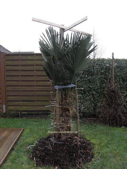 winterschutz für pflanzen selber bauen frostharte palmen palmen bananen und andere exotische pflanzen
