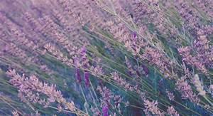 Lavendelöl Selber Machen : entspannung pur 3 rezepte zum bade l selber machen ~ Markanthonyermac.com Haus und Dekorationen