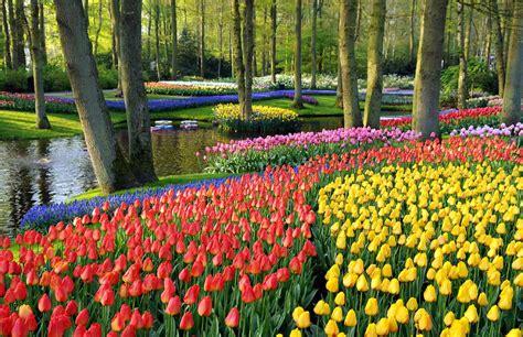 how to plant a tulip the garden of eaden february 2013