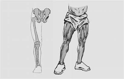 Draw Legs Easy Anatomy Step Guide Gvaat