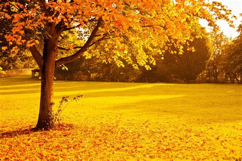 Fall Backgrounds Yellow by Fall Foliage Gold Leaves Nature Orange Park