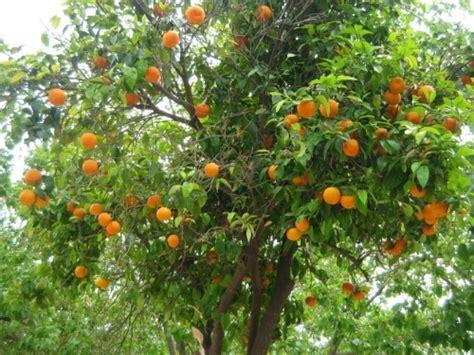 meubles cuisine blanc l 39 orange oranger navels