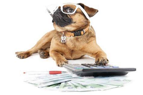 estil  demmener son chien sur son lieu de travail
