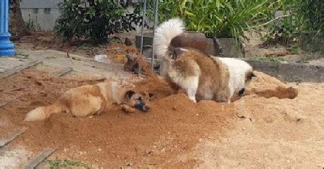 funny dog digging gif luvbat