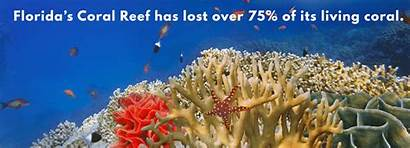 Coral Ocean Yards Hope Greatergood Florida Reef