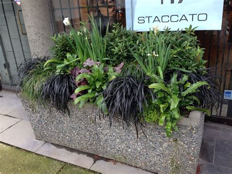 A Winter Container In Vancouver. It's In Partial Shade And