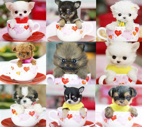 Cups Of Pups Pictures, Photos, and Images for Facebook