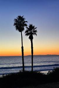Sunset Silhouette Photograph, California Palm Trees, San ...