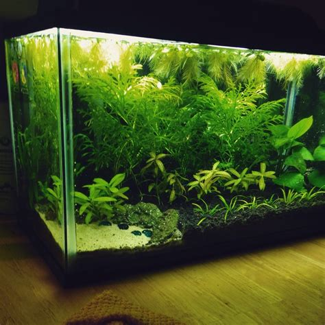 aquarium plants and fertilizers for beginners my aquarium club