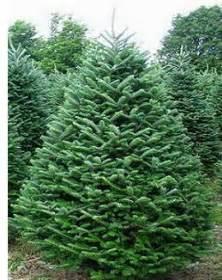 Douglas Fir Artificial Christmas Tree by Dale Forma A Tus Arbustos Arbustos