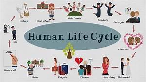 Human Life Cycle Vocabulary