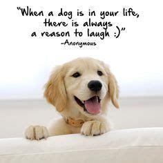 images  favorite dog quotes  pinterest dog