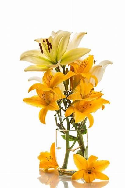 Lily Yellow Lilies Background Cutout Loveliness