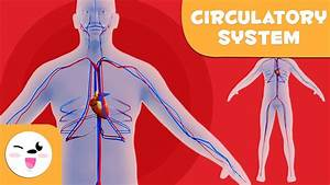 The Circulatory System - Learning The Human Body