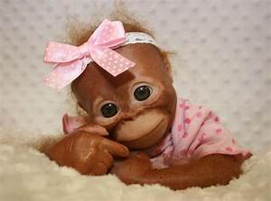 Pics For > Baby Orangutans In Clothes | Animal things ...